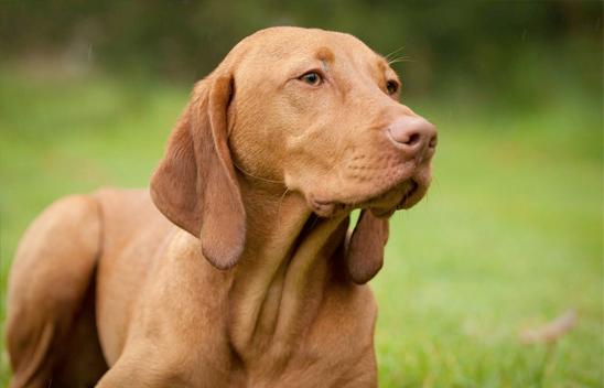 Moor Dog Training