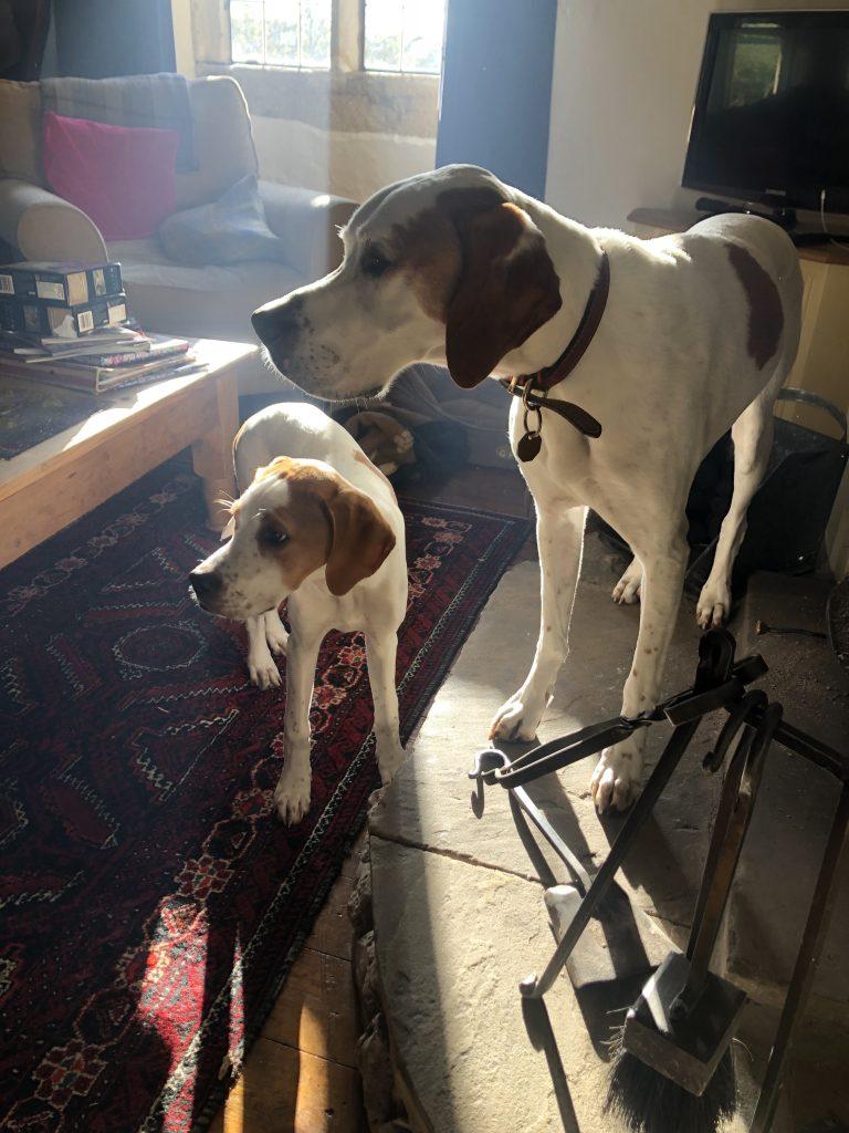 Dog Friendly Mini Break | Puppy Training | The Tessleymoor Way